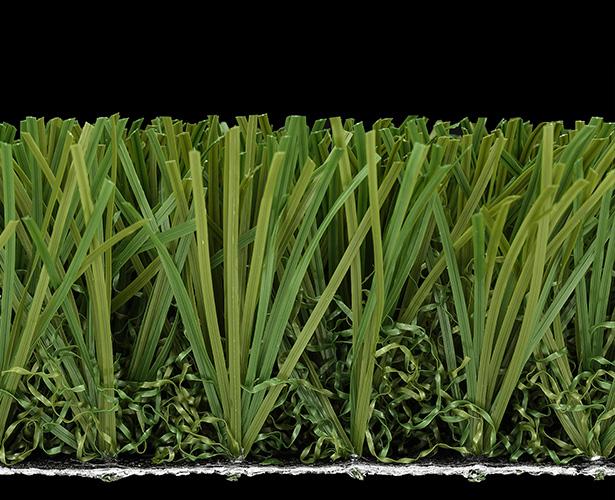 Stemgrass-EX2-6002B175-B